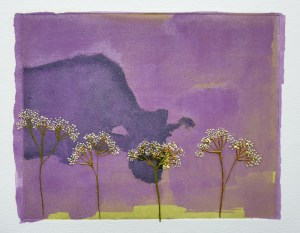 Cow with Parsley
